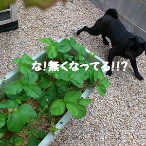 20120523143239_photo_778x778_2
